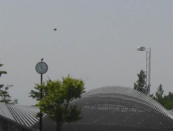 鳥型UFO