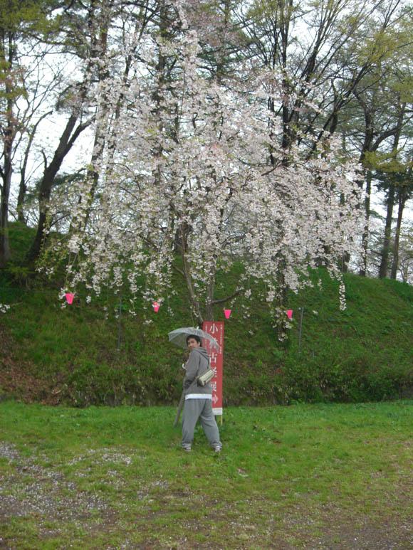 桜の下のトマ
